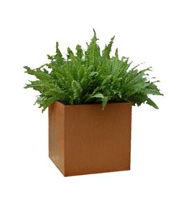 Cortenstaal Plantenbak 40x40x40 cm